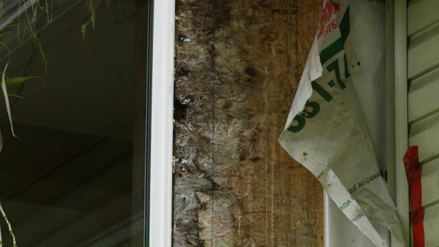 Les moisissures qui envahissent la maison